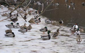 Waterfowl at Zoo © Mary Anne Romito