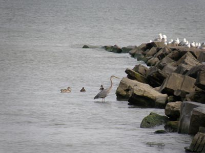 Breakwall Birds